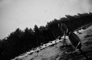 silhuetter, ski, skov, træer